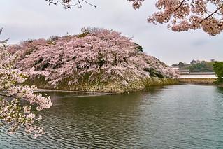 彥根城 / Hikone-jo