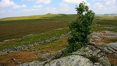 Aubrac (Yvan LEMEUR) Tags: aubrac granite clôture immensité grandsespaces france extérieur lacdeborn lozère aveyron arbre landscape paysage ciel pastoralisme