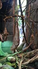 20180523_110256 (TheSlayerNL) Tags: wildlands emmen zoo dieren animals adventure wildlandsadventurezoo
