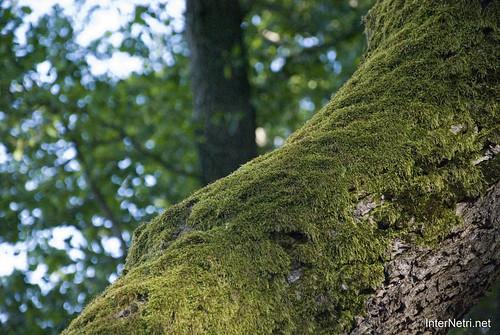 Шацький Національний Природний Парк Озеро Пісочне Стовбури дерев InterNetri  Ukraine 385