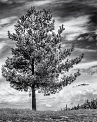 Having a great Day... (Ody on the mount) Tags: anlässe ardèche bäume em5ii frankreich himmel landschaft mzuiko6028 omd olympus pflanzen urlaub wanderung wolken bw clouds landscape monochrome sw trees jaujac auvergnerhônealpes fr