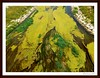 Verdin sicodélico (bruixazul poc a poc...) Tags: rio gandia algas verde agua