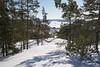 Dans la vue ... (sosivov) Tags: forest landscape sweden snow mountain trees view winter white