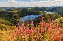 Auch der Rote Fingerhut braucht Wasser (linke64) Tags: thüringen stausee deutschland germany wolken himmel hohenwartestausee bäume berge blumen wald natur landschaft