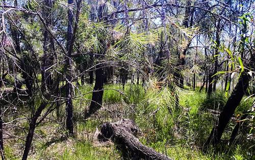 82 Gorokan Road, Wyee NSW 2259