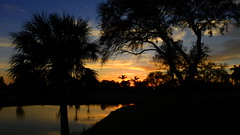 February Sunset (Jim Mullhaupt) Tags: sunset sundown dusk sun evening endofday sky clouds color red gold orange pink yellow blue tree palm outdoor silhouette weather tropical exotic wallpaper landscape nikon coolpix p900 pond lake water reflection manateecounty bradenton florida jimmullhaupt cloudsstormssunsetssunrises photo flickr geographic picture pictures camera snapshot photography nikoncoolpixp900 nikonp900 coolpixp900
