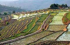terraced fields - 2 (vil.sandi) Tags: terracedfields madagascar