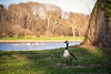 Spring Day Along the Schuylkill River (mhoffman1) Tags: canadagoose fairmountpark philadelphia philly schuylkillriver sonyalpha a7riii park rowing spring waterfowl pennsylvania unitedstates us
