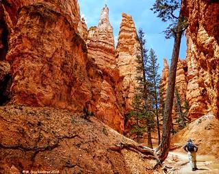 Walking among the Hoodoos, Queens Garden Loop, Bryce Canyon National Park