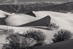 20180316_Death_Valley_004 (petamini_pix) Tags: california deathvalley desert mesquitedunes deathvalleynationalpark dune sanddune pattern shadow shape plants shrubs landscape blackandwhite blackwhite bw monochrome grayscale
