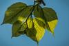 Kleur, licht, schaduw/Color, light, shadow (truus1949) Tags: lente bladeren licht schaduw natuur
