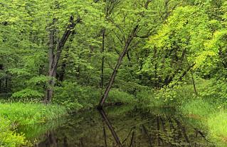 Van Loon Pond