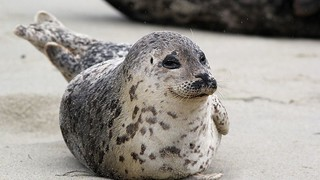 Selfies, Unsolicited Human Attention Pose Major Threat to Seal Pups