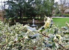 Poitiers - Parc de Blossac (JeanLemieux91) Tags: hiver winter invierno février february febrero poitoucharentes poitiers france europe parque parc park trees arbres árboles jet pond étang lago ilex acebo holly houx