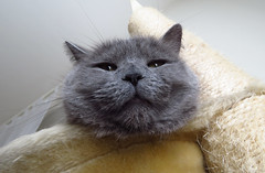 Pure Fluffiness (evil king) Tags: emerald pussycat pussy büsi cat chat gato kitten kitty sweet cute adorable meow katze kätzchen fluffy furball furry chillers