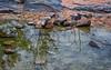 Reflections (Anne Worner) Tags: anneworner reflection granite inkslakestatepark burnett texas landscape em5 olympus