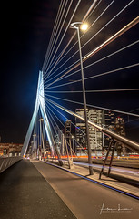 Glowing Erasmus Bridge I (Alec Lux) Tags: rotterdam architecture atmosphere bridge building canal city cityscape erasmus holland longexposure netherlands nighscape nighshot night nightscape skyline skyscraper structure urban water zuidholland nl