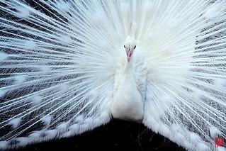 """""""Si ce sont les plumes qui font le plumage, ce n'est pas la colle qui fait le collage."""""""