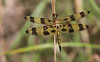 halloween pennant (slider5) Tags: dragonfly halloween pennant ms