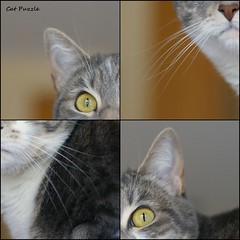 Cat Puzzle (PDX Bailey) Tags: collage montage weird unusual different puzzle fourths four
