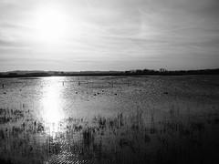 Minsmere, view across the Scrape (Graeme Terry) Tags: minsmere plants blackwhite marshland rspb reeds marsh suffolk