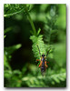 Insect raising arms in celebration (Ghost Hunter Frankfurt) Tags: flora fauna insect