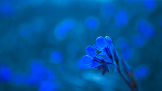 Ethereal blue.
