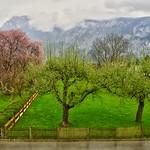 Spring has arrived in Kiefersfelden, Bavaria thumbnail