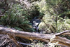 Fallen crossing (Stray Toaster) Tags: australia blue mountains leura