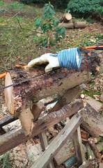 Na de storm (peter.velthoen) Tags: stormen wood tree fallen dead broken garden grass tuin bos omgewaaid gebroken rhododendron