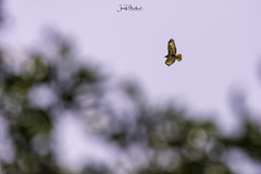 I am free (iosif.michael) Tags: nikon tamron wildlife birds biodiversity ecosystem sky fly cyprus