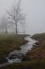 Ochtend mist   Arcen (Frank Berbers) Tags: nikond5100 ochtendmist mist fog brouillard nebel morgennebel