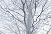 Life (George Pancescu) Tags: nikon d810 70200mm tampa tree snow snowing winter nature natural outdoor