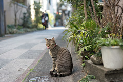 猫 (fumi*23) Tags: ilce7rm3 sony 55mm a7r3 sel55f18z sonnartfe55mmf18za cat katze neko animal zeiss sonnar street alley miyazaki bokeh 猫 ねこ 路地 ソニー