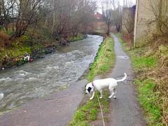 Exploring a new path (keibr) Tags: blip blipfoto bramble keibr river spring uktrip walk