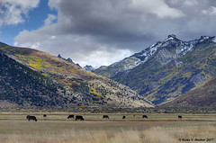 Mouth of Lamoille Canyon, Nevada (walkerross42) Tags: cows pasture field nevada lamoille lamoillecanyon autumn fall storm clouds mountains snow pentaxart