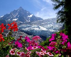 Glacier des Bossons and Aiguille du Midi. Mont Blanc Range. (elsa11) Tags: glacierdesbossons chamonix montblancmassif aiguilledumidi montblancrange glacier gletscher gletsjer mountains montagnes hautesavoie france frankrijk alpen alpes alps flowers bloemen rhonealpes