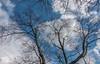 DSC00156 (johnjmurphyiii) Tags: 06416 clouds connecticut cromwell originalarw shelly sky sonyrx100m5 spring usa yard johnjmurphyiii