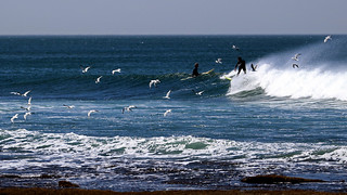 Sea gulls and surfers