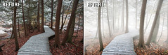 Before After - Forest - Ben Heine Photography (Ben Heine) Tags: beforeafter benheinephotography photography nature landscape before after photoediting editing retouching photoretouching objectremoval colorcorrection photocorrection composition restoration photorestoration masking clippingpath clipping mattepainting retouche retouchephoto photographie foto fotografie