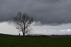 Light and shadow (dfromonteil) Tags: tree arbre nuage gris blanc grey cloud herbe grass vert green silhouette paysage landscape nature orage storm