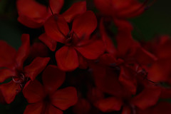 Red (Sagadh) Tags: closeup closeups close