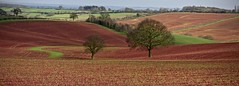 RED NOTTINGHAMSHIRE By Angela Wilson (angelawilson2222) Tags: scenery crops crop red colour color light nottinghamshire nature nikon angela wilson angelawilson