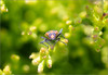 FaceOff (mikeyp2000) Tags: plant closeup nature bug green insect macro beetle red
