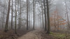 Into the mist... (L A H Photography) Tags: mist fog landscape trees forest woodland yorkshire weather contrast colourful path nature outdoors nikon d7200 wood tree trail