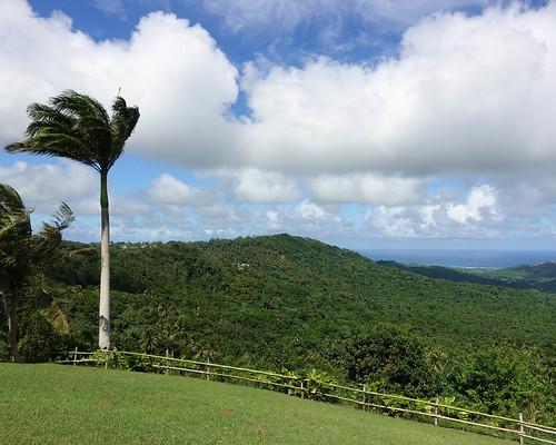 Barbados View