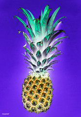 Aerial view of pineapple in negative filter blue background (rawpixel.com) Tags: aerial background bluebackground colorful delicious dessert diet effect energy filter flatlay food fresh freshness fruit funky healthy ingredient inversion invert inverted isolated juicy name natural nature negative negativefilter nutrition nutritious organic pattern pineapple raw refreshment ripe season seasonal slice summer summertime sweet taste tasty texture textured tropical tropics vitamin wallpaper yummy