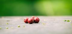 berries and birdfeed (annapolis_rose) Tags: berries redberries birdfeed reifelbirdsanctuary delta greatervancouver