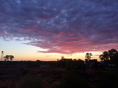 Pre dawn Australia (Smoucher) Tags: reststop camping firstlight light sunrise outback bush country bluehour