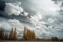 Clouds (Lolo_) Tags: infrared provence 715nm clouds nuages mérindol mallemort france peupliers sky ciel explore ir infrarouge trees arbres